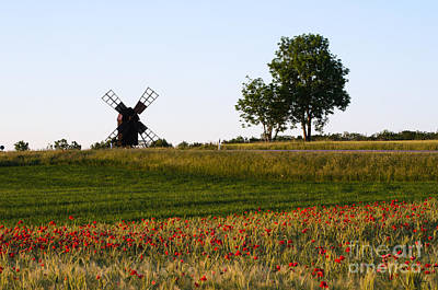 Photograph - Landscape With A Field Of Poppies And An Old Windmill by Kennerth and Birgitta Kullman