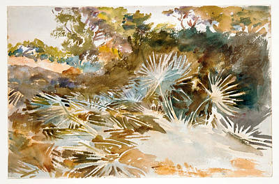 Painting - Landscape With Palmettos by John Singer Sargent