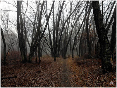 Photograph - Langdon Woods In Fog by Wayne King