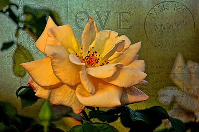 Photograph - Language Of The Heart - Rose by HH Photography of Florida