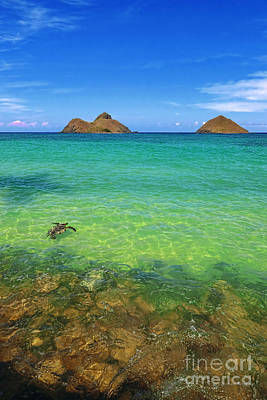 Lanikai Beach Sea Turtle Art Print