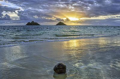 Photograph - Lanikai Coconut by Dan McManus