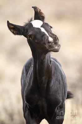 Photograph - Lansa - A Wild Mustang Colt by Deby Dixon