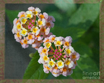 Grow Digital Art - Lantana - I'm Not A Weed by Terry Weaver