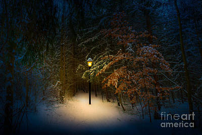 Lantern In The Wood Art Print