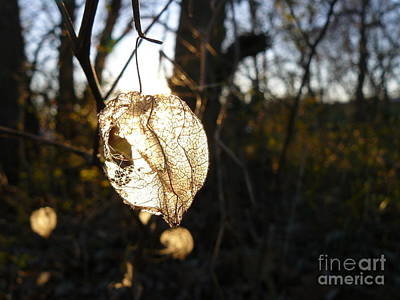 Photograph - Lantern by Jane Ford