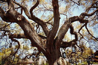 Photograph - Colonial Lantern Tree by Valerie Reeves