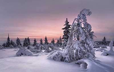 Winter Trees Photograph - Lappland - Winterwonderland by Christian Schweiger