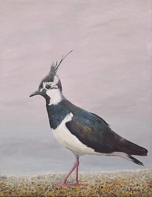 Lapwing Painting - Lapwing by Andy PYRAH