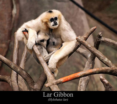 Digital Art - Lar Gibbon by Chris Flees