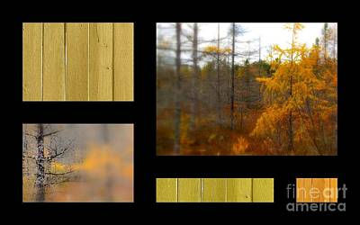 Photograph - Larch And Wood by France Laliberte