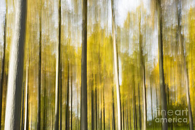 Abstract Movement Photograph - Larch Grove Blurred by Anne Gilbert