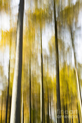 Abstract Movement Photograph - Larch In Abstract by Anne Gilbert