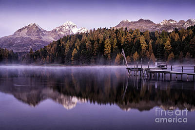 Larch Pine Reflections Print by Timothy Hacker