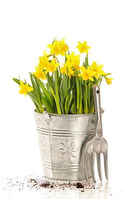 Trowels Photograph - Large Bucket Of Daffodils by Amanda Elwell
