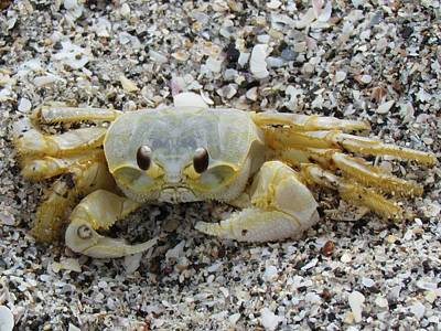 Print featuring the photograph Ghost Crab by Cynthia Guinn
