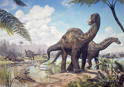 Crocodile Digital Art - Large Dicraeosaurus Sauropods by Mark Hallett