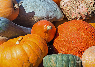 Photograph - Large Edible Gourds by Barbara McMahon