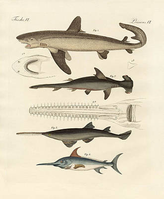 Swordfish Drawing - Large Fish Of Prey by Splendid Art Prints