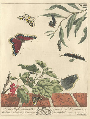 Magpies Wall Art - Photograph - Large Magpie Moth by Natural History Museum, London/science Photo Library