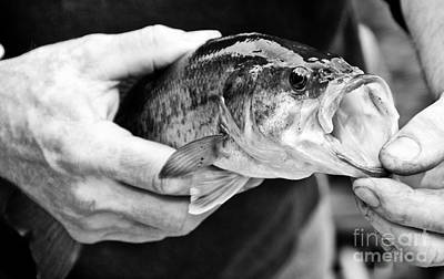 Photograph - Large Mouth Bass by Cheryl Baxter