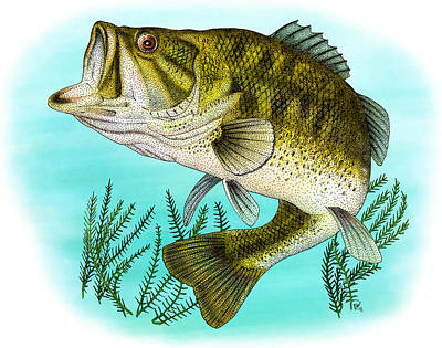 Largemouth Photograph - Largemouth Bass by Roger Hall