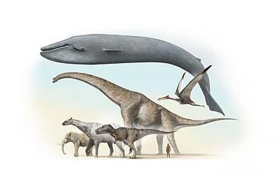 Brachiosaur Photograph - Largest Animals Size Comparison by Jos� Antonio Pe�as