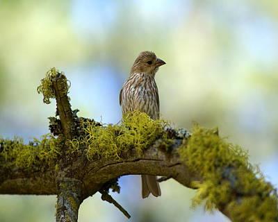Photograph - Lark Sparrow 2 by Ben Upham III