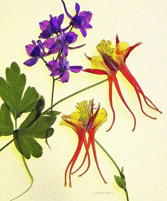 Photograph - Larkspur And Columbine by Chris Berry