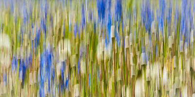 Photograph - Larkspur And Dandelion Abstract by Linda McRae