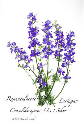 Photograph - Larkspur Bouquet by Roberta Jean Smith