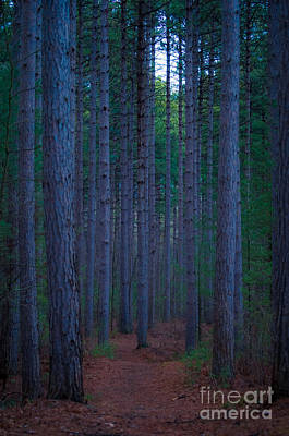 Photograph - Larose Forest by Bianca Nadeau