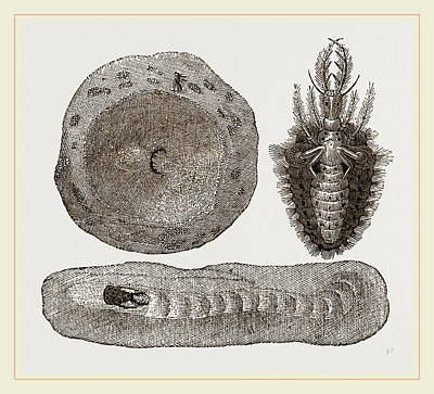 Ants Drawing - Larva Of Ant-lion And Pit by Litz Collection