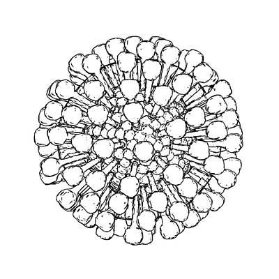 Lassa Virus Particle Art Print