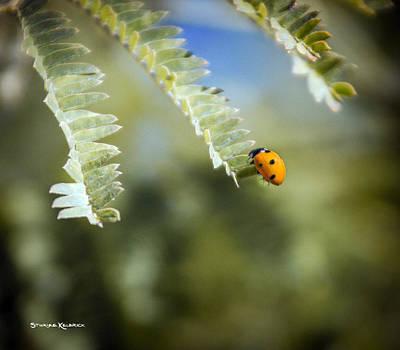 Photograph - Last Breath by Stwayne Keubrick