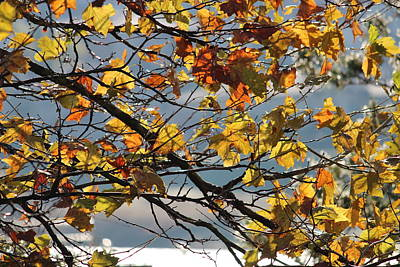 Photograph - Last Breaths Of Fall by Rima Biswas
