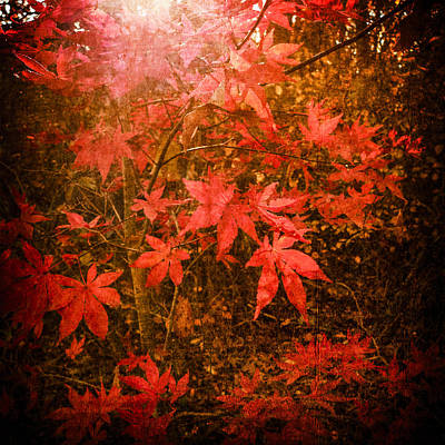 Photograph - Last Color Of Autumn by Frank Winters