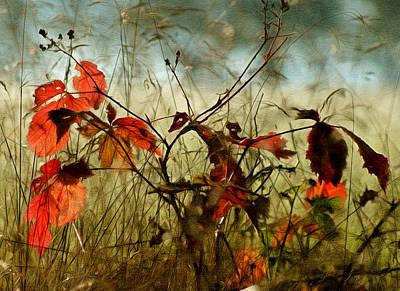 Of Autumn Photograph - Last Days Of Autumn by Georgiana Romanovna