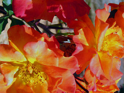 Photograph - Last Days Of Bloom by Amber Nissen
