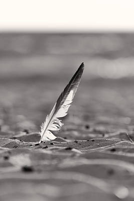 Seagull Photograph - Last Days Of Summer In Black And White by Sebastian Musial