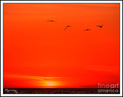 Photograph - Last Flight Of The Day by Mariarosa Rockefeller