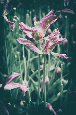 Watercolor Butterflies - Last Glance Tulips by Zina Zinchik by Zina Zinchik