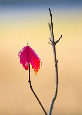 Photograph - Last Leaf by Dan Wells