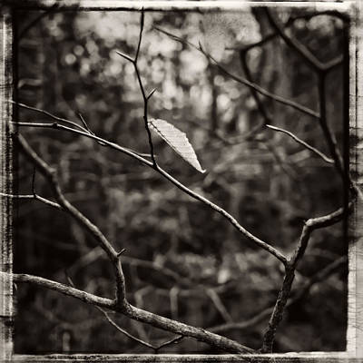 Photograph - Last Leaf by Frank Winters