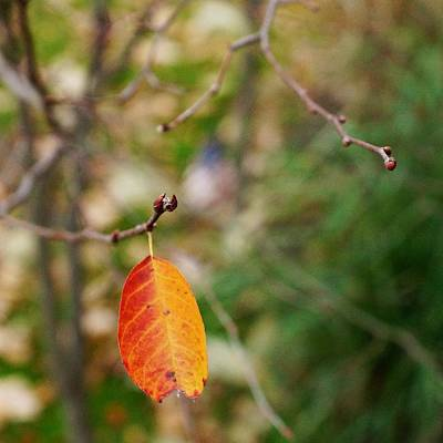 Close Up Photograph - Last Leaf November by Photographic Arts And Design Studio