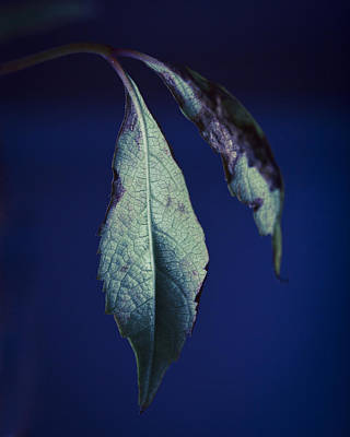 Photograph - Last Leaf by Scott Meyer
