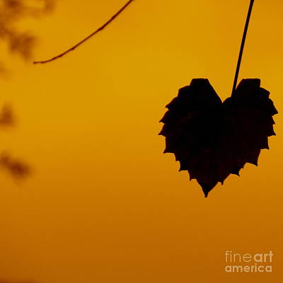 Photograph - Last Leaf Silhouette by Joy Hardee