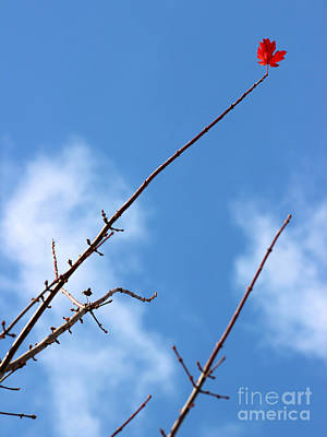 Photograph - Last Leaf Standing by Karen Adams