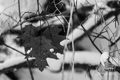 Photograph - Last Leaves by JT Lewis
