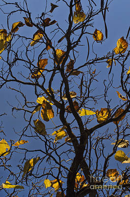 Last Leaves Of Autumn Art Print by Dave Gordon
